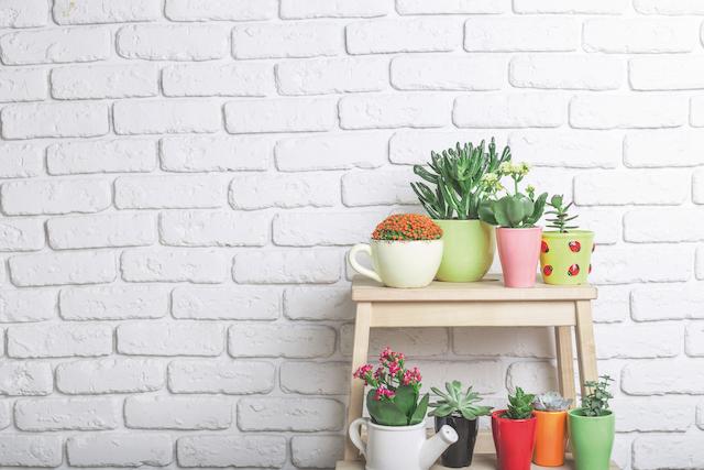 Plantas suculentas: qué son y cómo sacarle partido