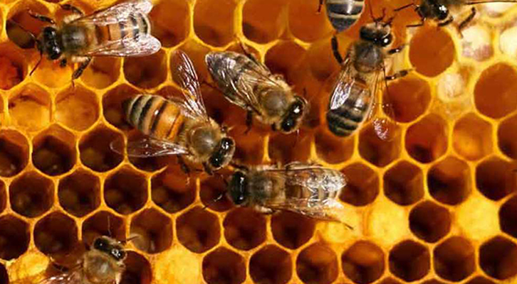 Cambiamenti climatici: l'inverno troppo mite ha ingannato le api, facendole risvegliare in anticipo