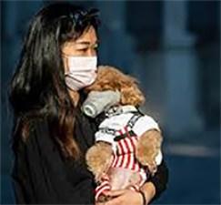 Cani e Gatti di fronte all'epidemia. Un cane risultato positivo a Hong Kong