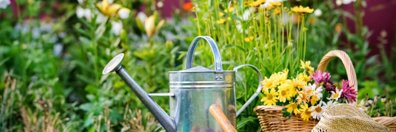 Giardinaggio Roma irrigazione e potatura Tutti gli