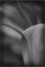 Plant form-3