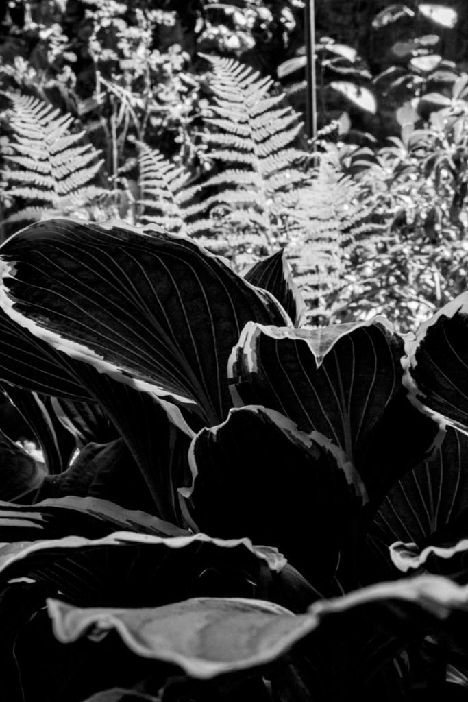 Isobel Lindsay - leaves