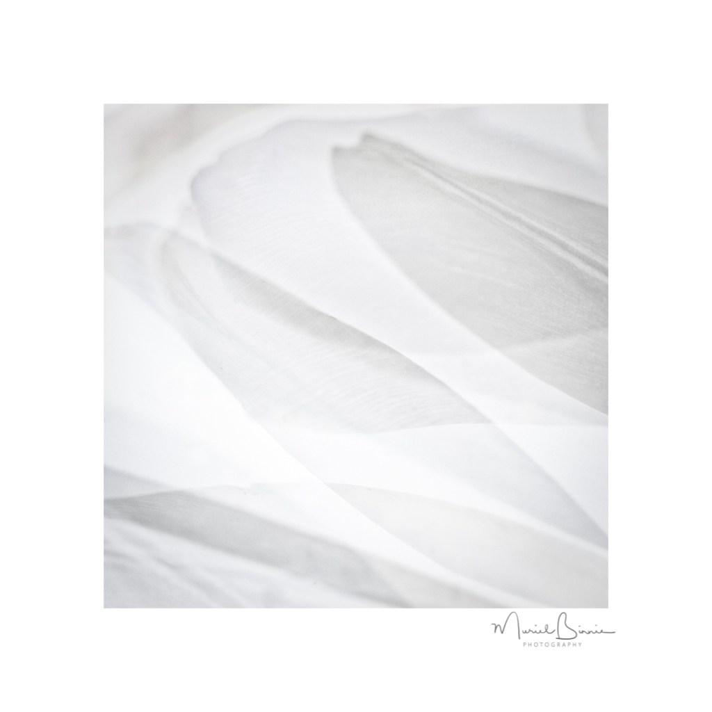 Muriel Binnie - 4 White on White