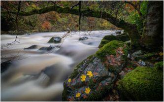 Martin Ashford - Ghost River