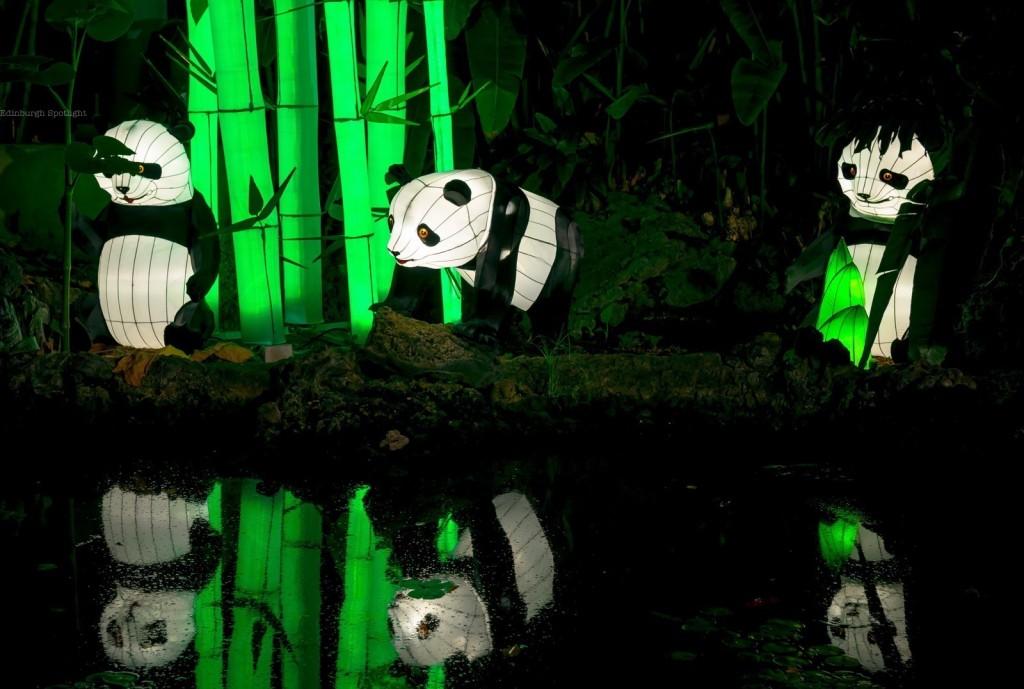 Zoo Light Hours