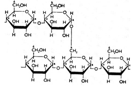 What are Polysaccharides?