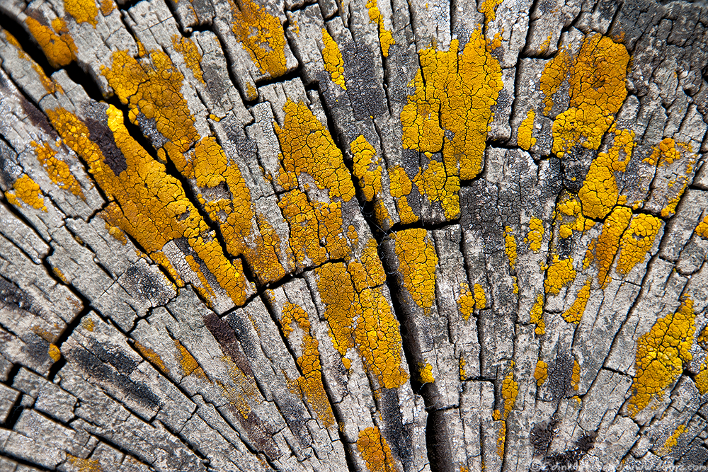 Lichen_TW7_2571-Edit6x4WEB.png