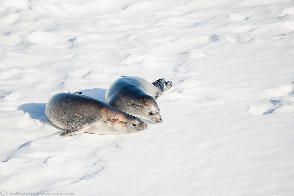 Seals_TW7_5074-Edit6x4WEB.jpg