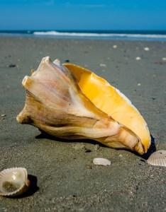 also shell island in edisto beach sc edistobeach rh