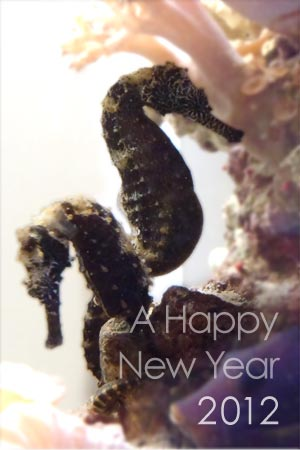 sea dragon couple for a Happy New Year