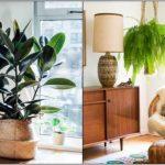 ανθεκτικά φυτά