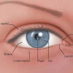 Inner Heart Diagram Roll Of Thunder Hear My Cry Plot Eye Anatomy Page 12