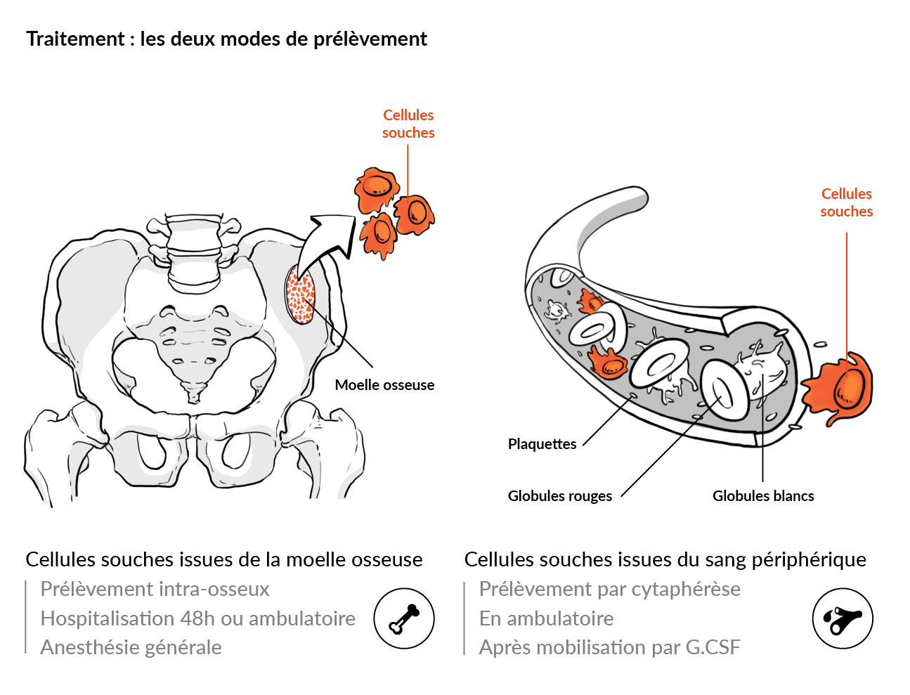 Illustration scientifique : le prélèvement de cellules souches