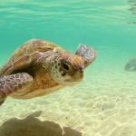 Voyage de Noces aux Seychelles – Domaine de l'Orangeraie – Destination finale