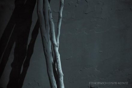 edhorwich-8731