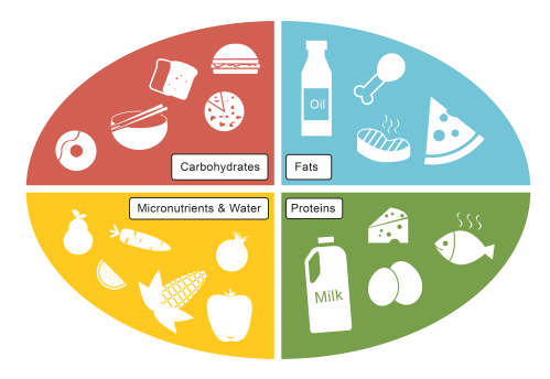 small resolution of A Healthy Diet Worksheet - EdPlace