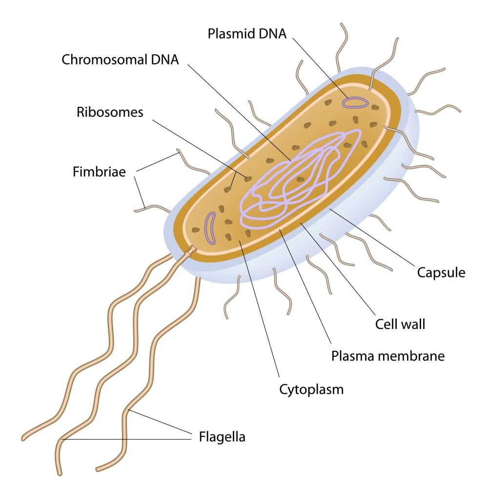 medium resolution of Compare Eukaryotic and Prokaryotic Cells Worksheet - EdPlace