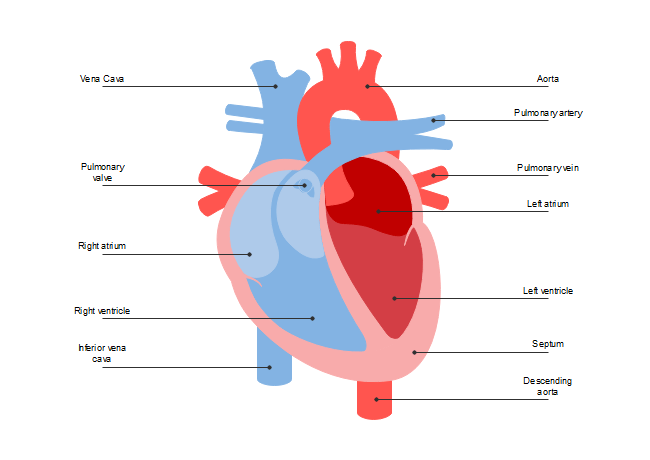 interior heart diagram wiring two way dimmer switch schematic free templates