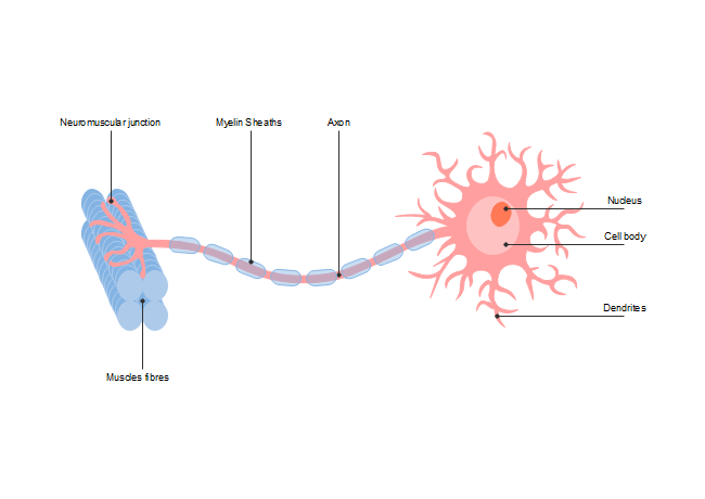 detailed neuron diagram mercury outboard wiring ignition switch free templates description freely adjust this science template from color scheme to text font style reflect a more valid human system