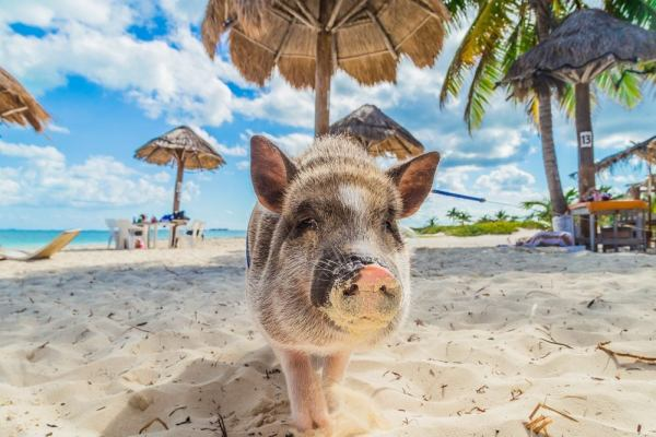 6 beaches with unbelievable animals eDreams Travel Blog