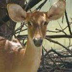Worlds first zoological cum rescue center at Mukundpur in Satna