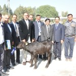 ICAR-CIRB become India's second center to produce a cloned buffalo