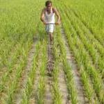 Assam government approves Rs 600 crore farm loan waiver