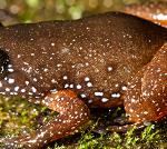 Frog new species