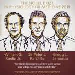 The Nobel Prize in Physiology or Medicine 2019