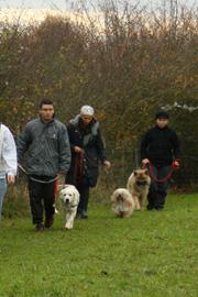 Education canine - Dressage chien