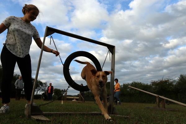 Agility avec un croisé chien de chasse
