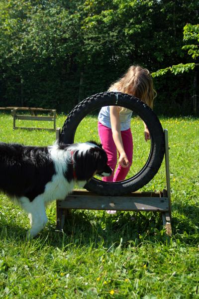 Agility avec un chien et un enfant