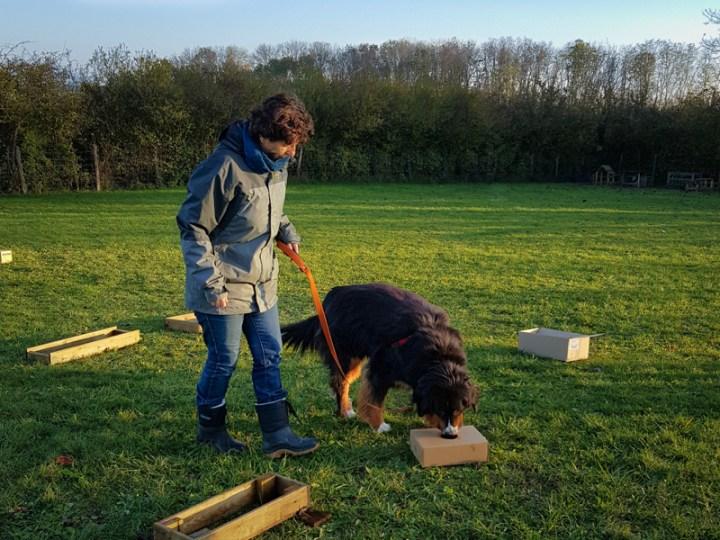 Cani-investigation dans le Jura-Dole-Menotey