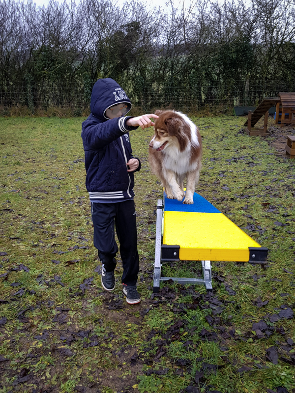 Chien et enfant en médiation animale dans le Jura