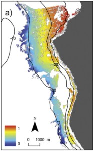Probabilistic mapping of seagrass