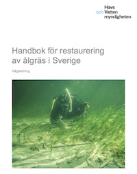 Handbook for eelgrass restoration in Sweden