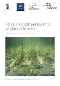 Management and restoration of eelgrass in Sweden