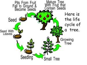 P7'S rainforest topic | Cockenzie Primary School