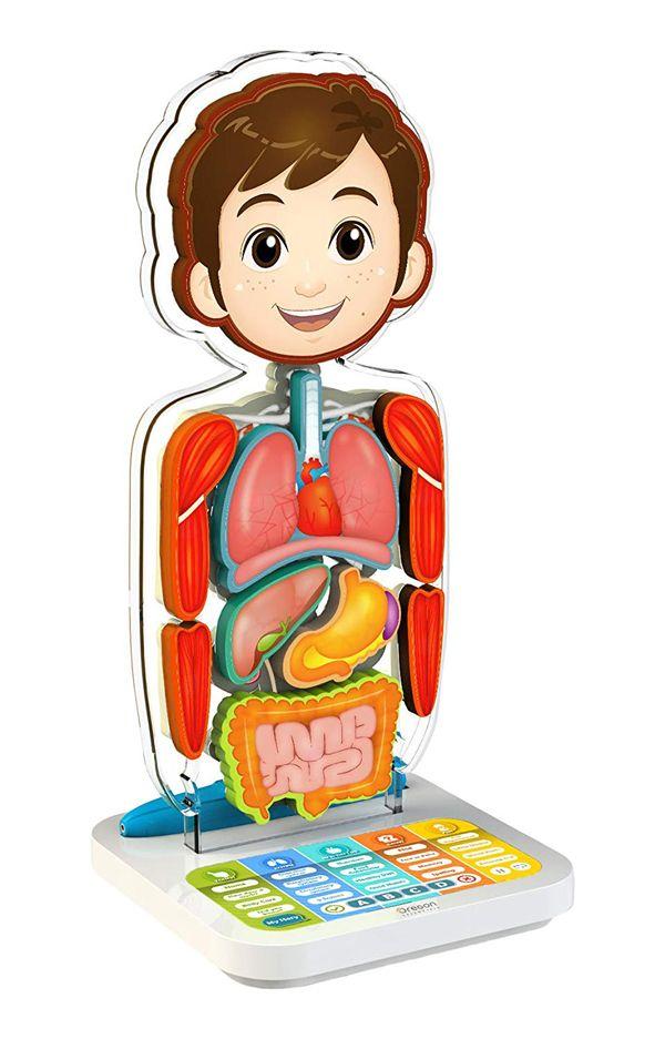 smart anatomy juego cuerpo humano
