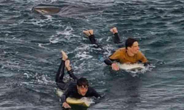 Surfista francês bate em tubarão e sobrevive a ataque na Austrália