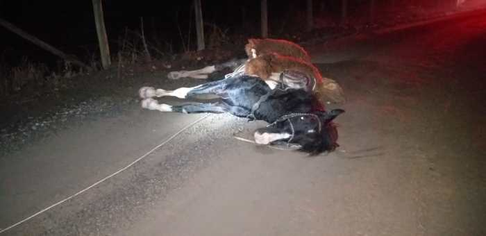 Homem e cavalo são atingindos por fio elétrico, em Taió; cavalo morreu na hora