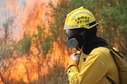 Em 2020 foram 3.369 ocorrências de incêndio em vegetação em SC