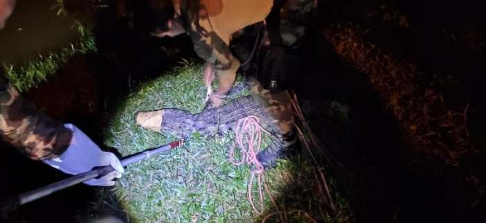 Animal estava solto em via pública (Foto: Divulgação/ Polícia Militar Ambiental)