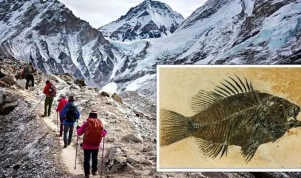 Especialistas mostram que restos de peixes fossilizados foram encontrados no monte Everest (Foto: Getty)