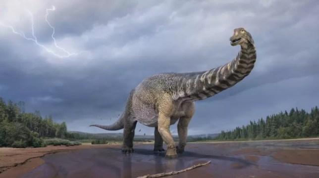 Representação artística do Australotitan cooperensis, maior dinossauro já descoberto na Austrália (Foto: Vlad Konstantinov / Museu de História Natural Eromanga)