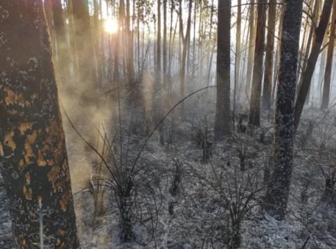 Proprietário perde controle sobre incêndio que destrói 5000m² de área de reflorestamento em Petrolândia