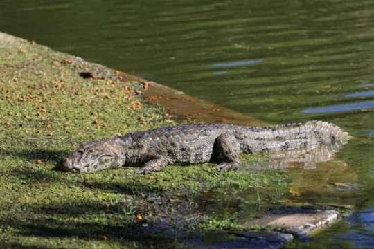 Réptil vive no Parque desde 2020 e ainda não tem nome (Foto: Prefeitura de Florianópolis / Divulgação)