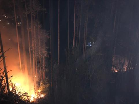 Incêndio em reflorestamento de eucalipto consome área aproximada de 1000m² em Ituporanga