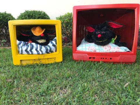 Projeto da APAE de Pouso Redondo transforma televisores sem uso em casinhas para pets