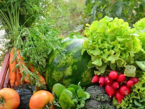 Primavera: saiba como economizar com os alimentos da estação em SC
